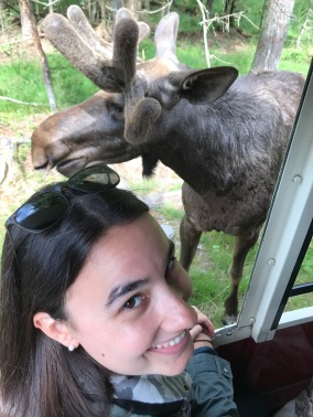 Laura, moose